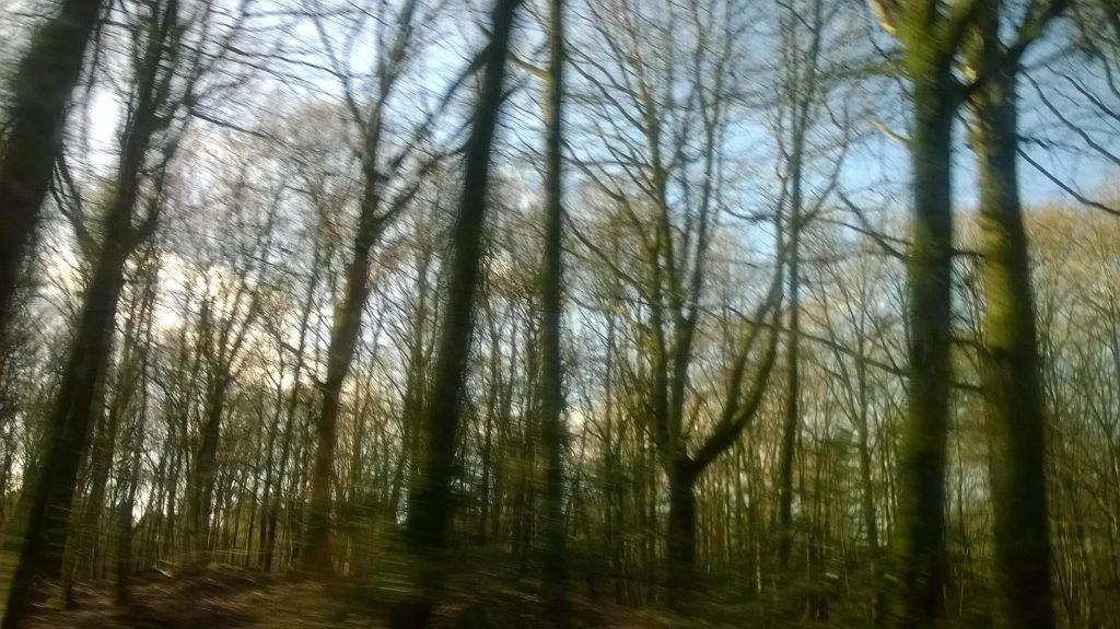 murmure des arbres